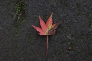 フジフィルムXF10の作例 紅葉