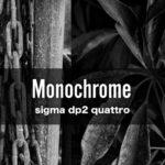 sigma dp2 quattroでモノクロ写真
