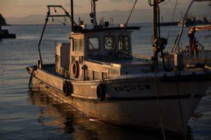 内浦湾の漁船